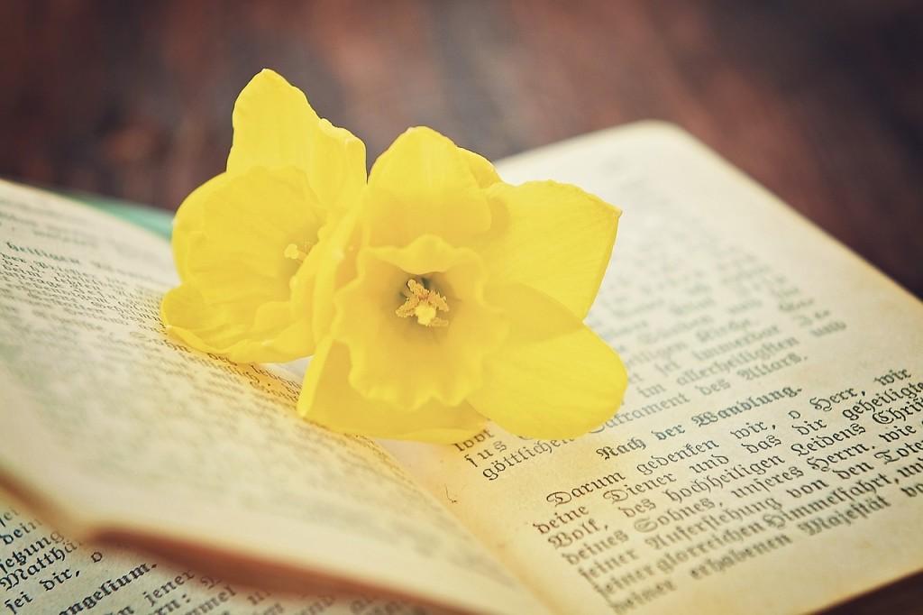 book-741942_1280