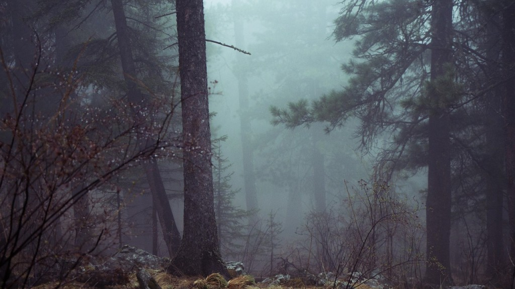 forest-801777_1280