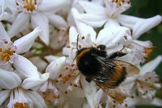 No More Queen Bee Syndrome: Women Empowering Women